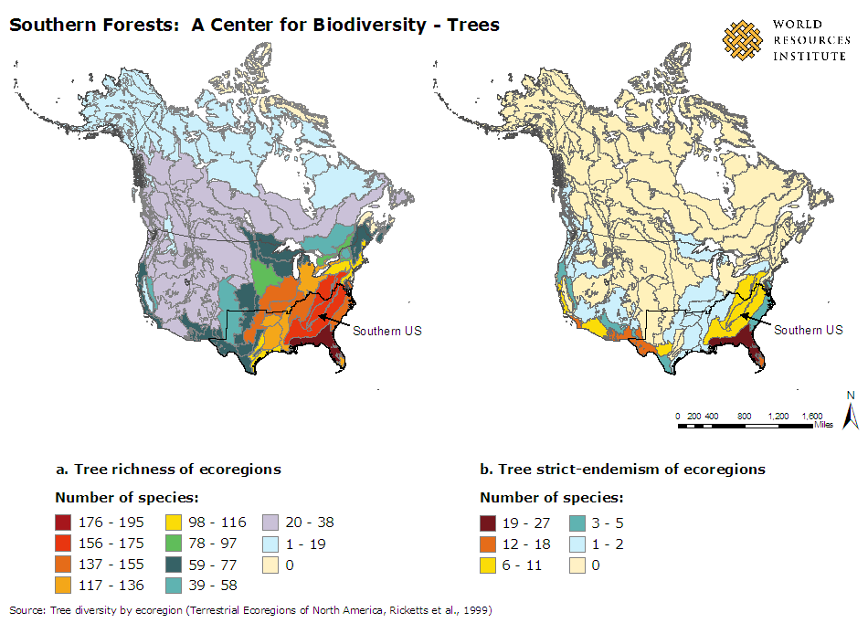 Tree Diversity in the North America
