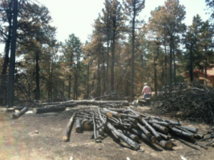 Colorado burn scar pine logs