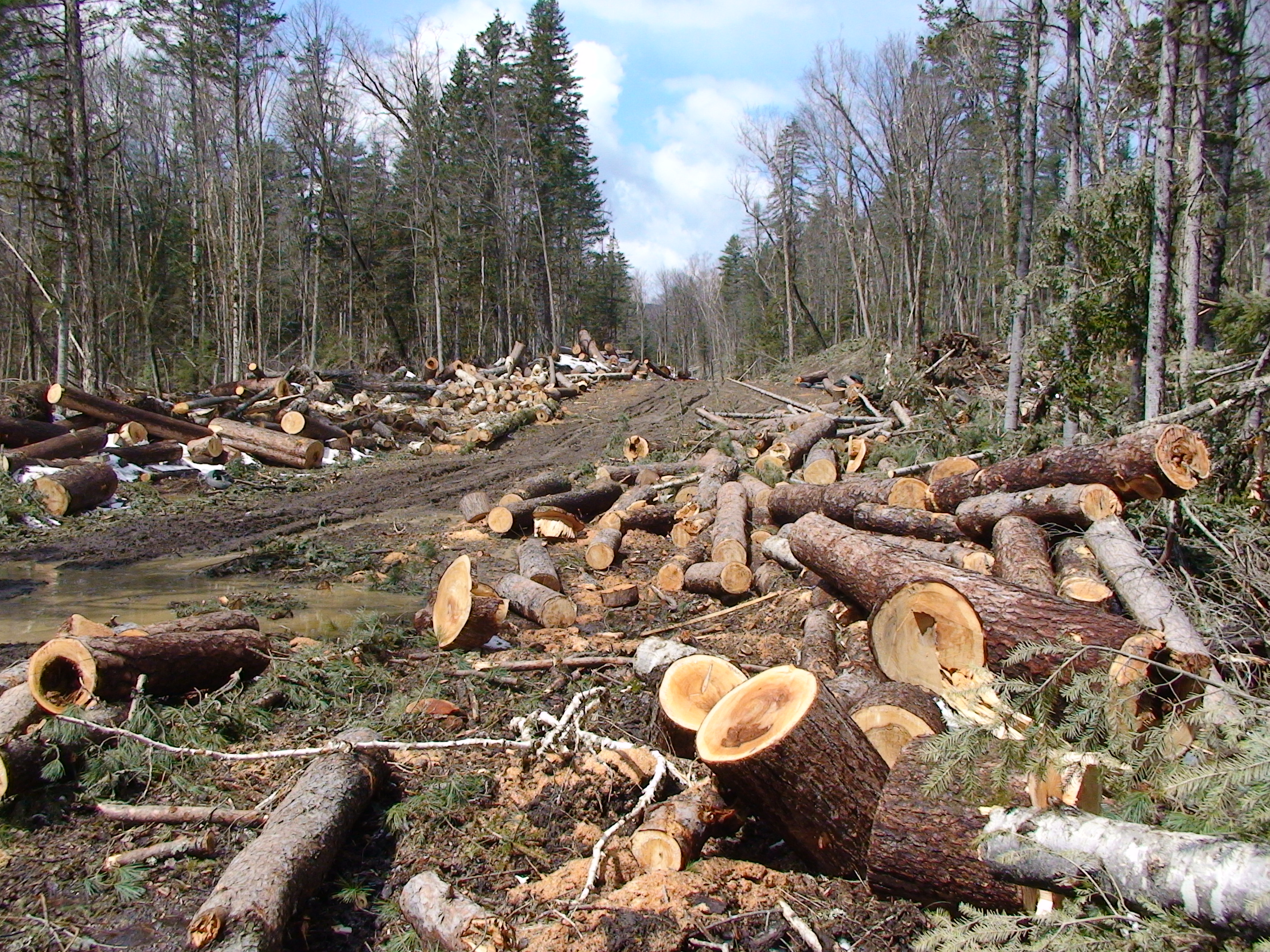 Wood From Trees ~ How to use the entire tree when salvaging wood and cutting