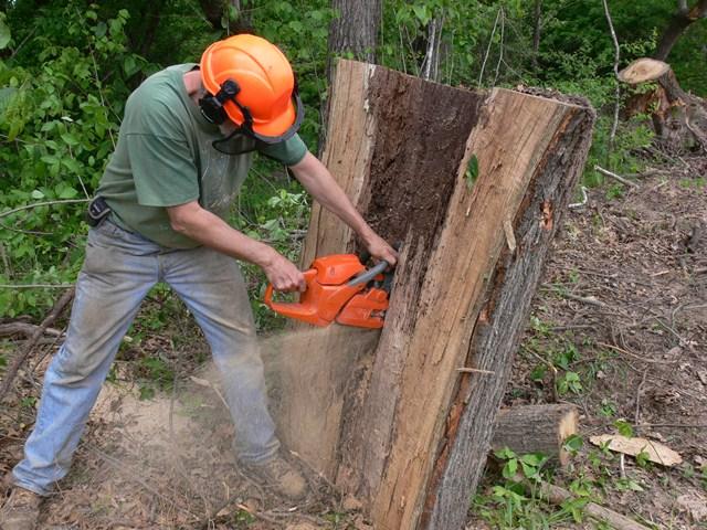 Milling Damaged Wood Salvaged Lumber Trees 2 Money