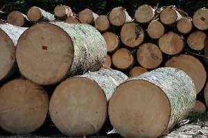 14 Myths About Sawmilling and Trees