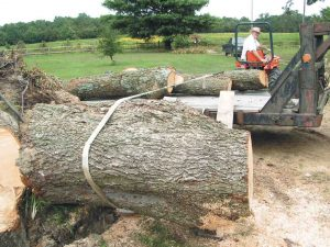 parbuckling a pecan log