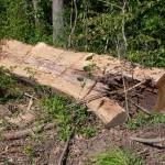 Split Oak Log